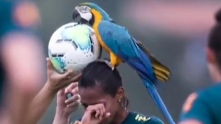 Mecz reprezentacji Brazylii przerwany! Powodem wizyta niespodziewanego gościa