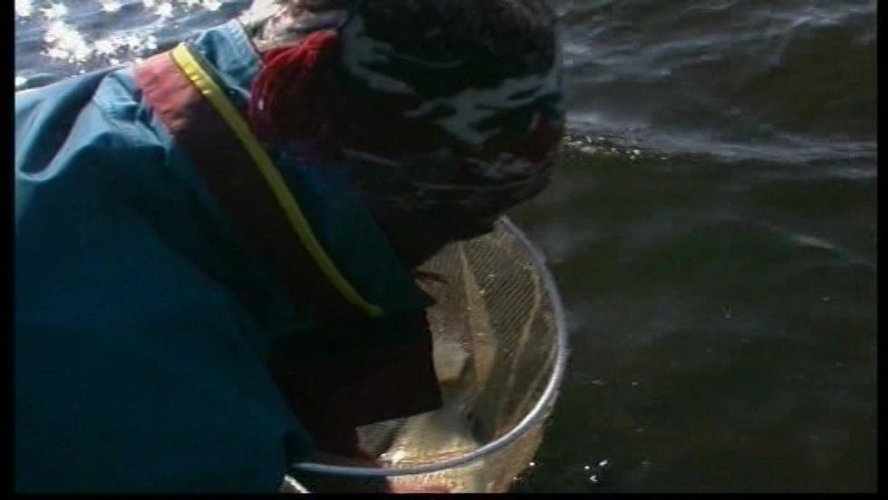 Taaaka ryba - Odcinek 51